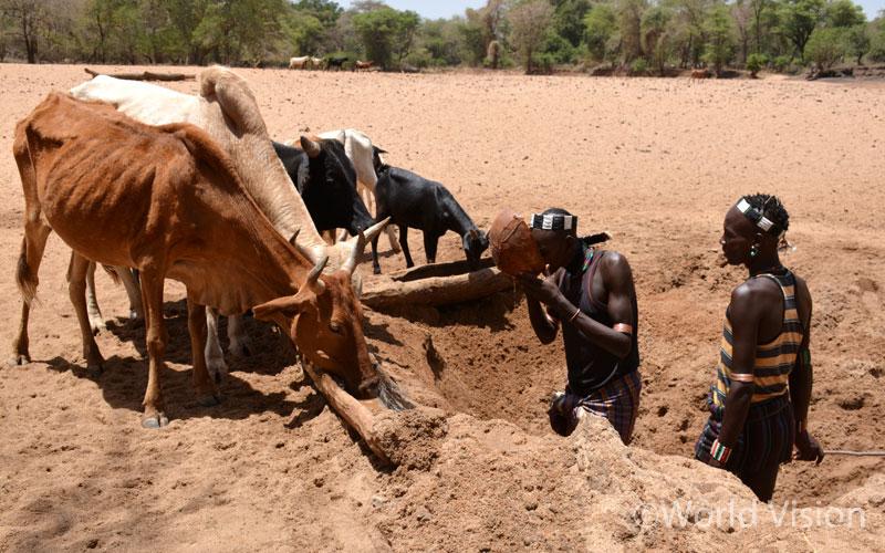 ▲ 땅을 파서 나온 물을 가축들에게 주고 있는 에티오피아 주민(출처: 월드비전)