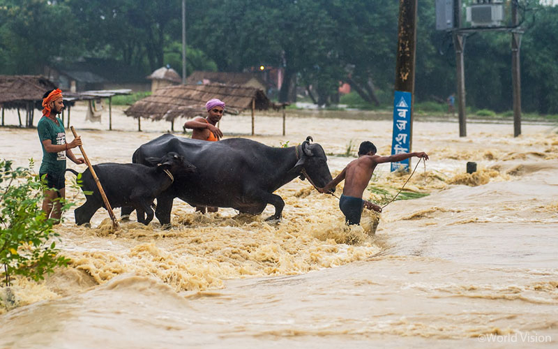 ▲ 소를 데리고 불어난 강물을 헤쳐나가는 가족의 모습, 낮은 평야 지대의 마을들은 대부분 물에 잠겼습니다. (출처: The Guardian)