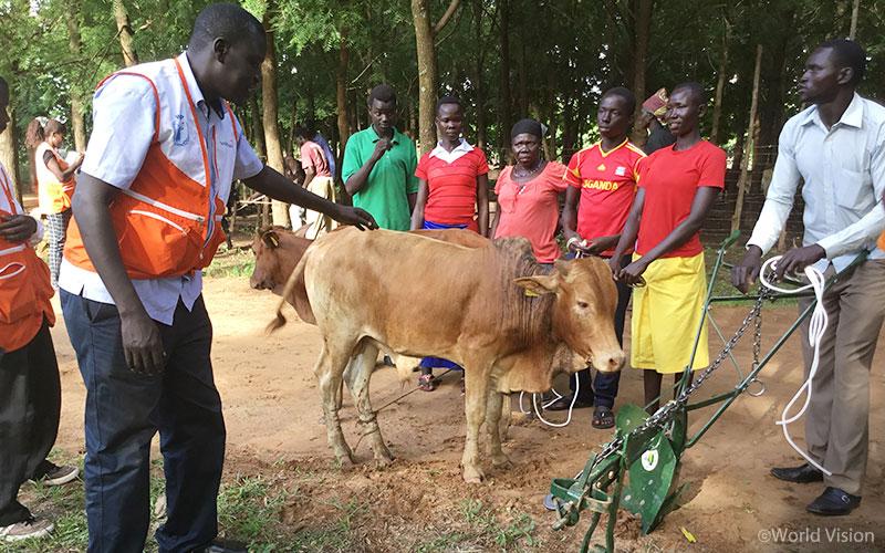 ▲ 남수단 난민 농부그룹에게 가축과 농기구를 이용하는 농법을 설명해주는 월드비전 직원(출처: 월드비전)