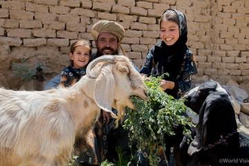 가축 관리 교육을 받은 가정에서 염소들에게 먹이를 주고 있다