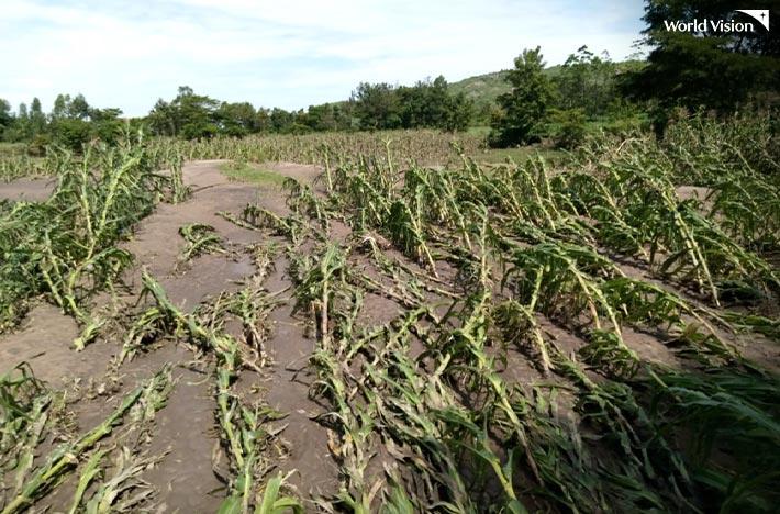 홍수 피해로 식물들이 쓰러져있는 모습